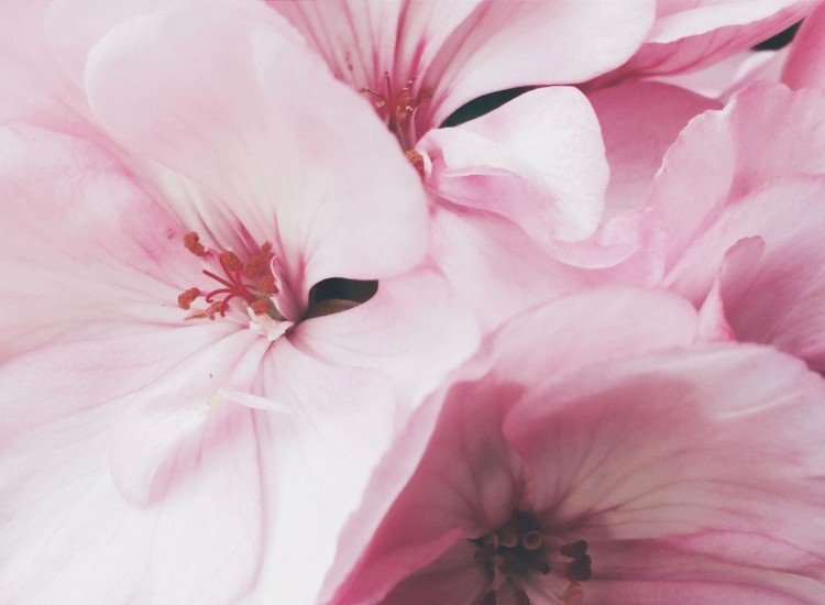 Цветя-Фототапет Нежен фон