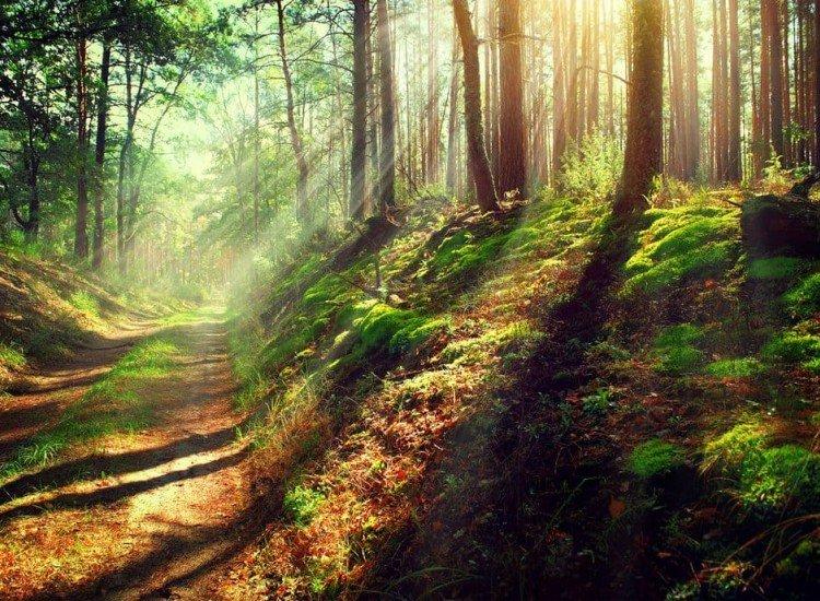 Пейзажи и природа-Фототапет Горска пътека