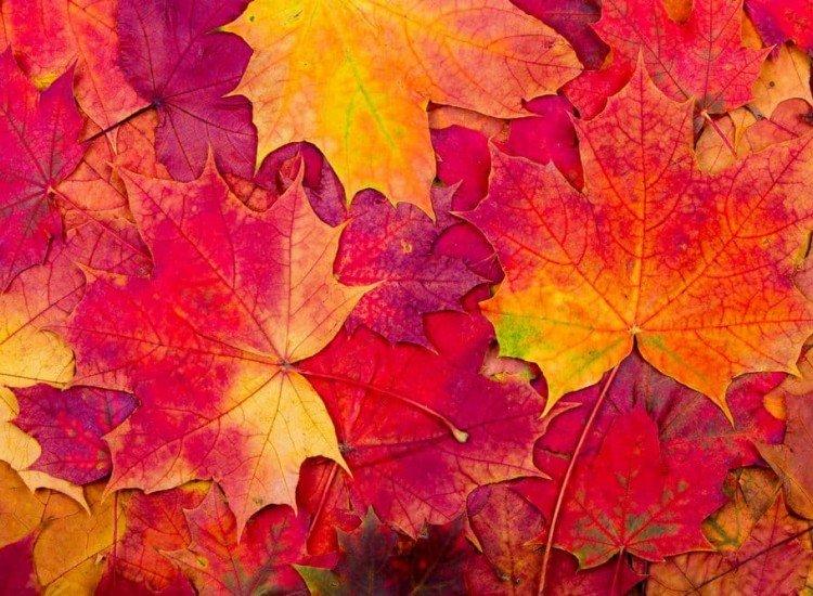Растения-Фототапет Есенни листа