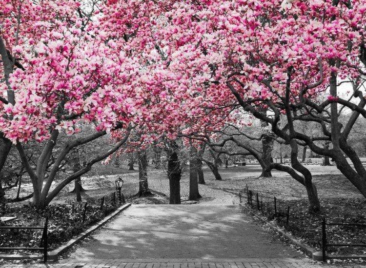 Пейзажи и природа-Фототапет Пейзаж с розови цветове