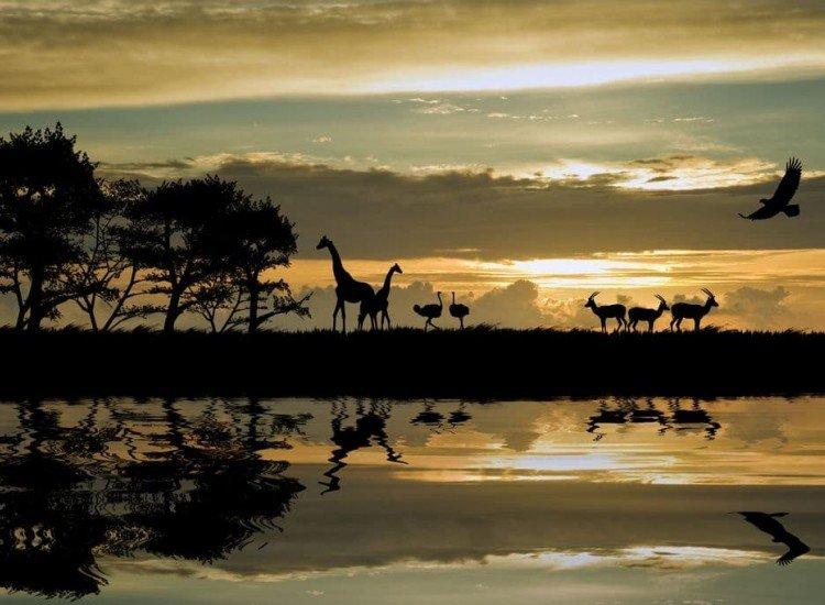 Животни и дива природа-Фототапет Силуети на животни в Африка