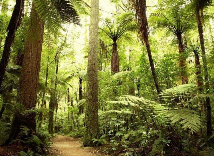 Растения-Фототапет В гората