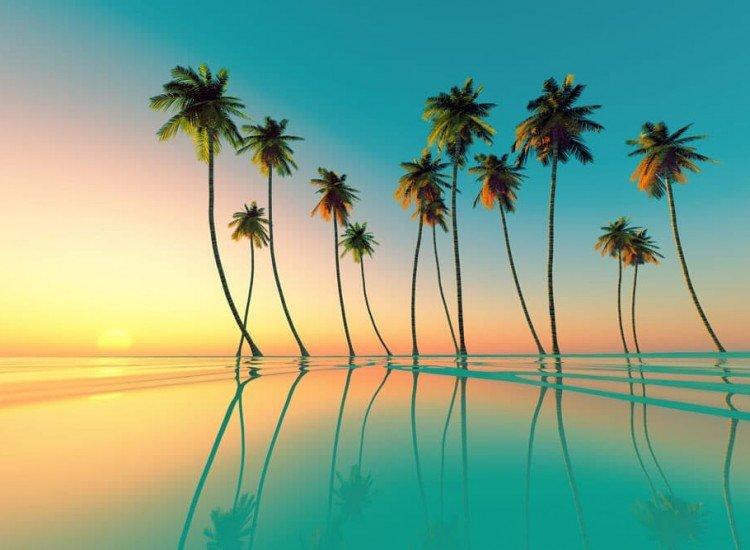 Морски и тропически-Фототапет Палми