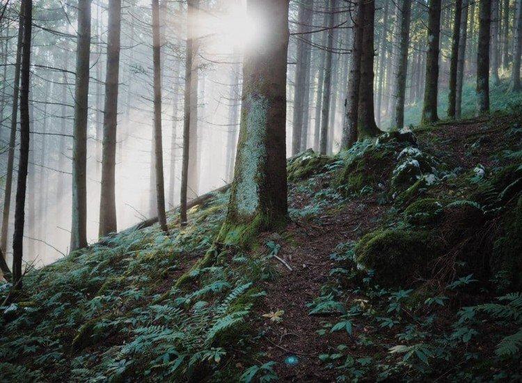 Пейзажи и природа-Фототапет Дълбоко в гората