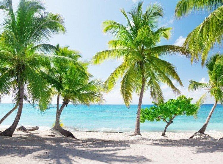 Морски и тропически-Фототапет Остров Каталина