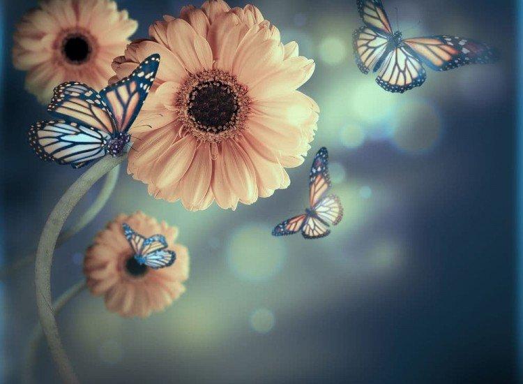 Цветя-Фототапет Цветя и пеперуди