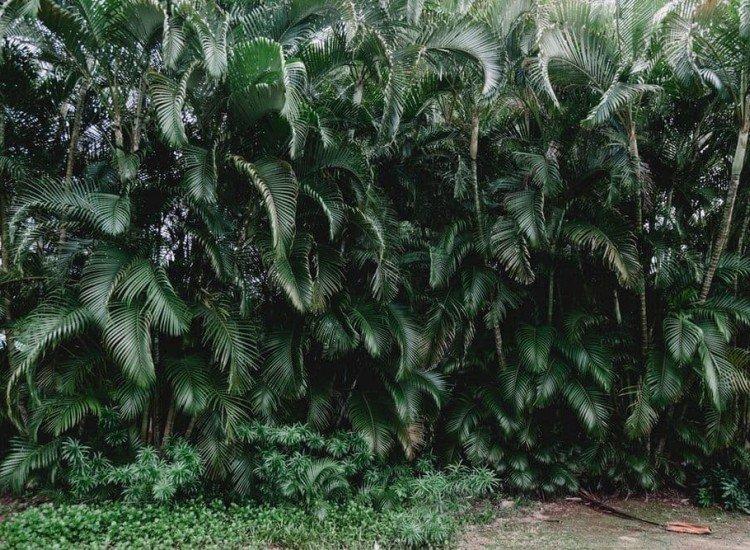 Растения-Фототапет Хавайска гора