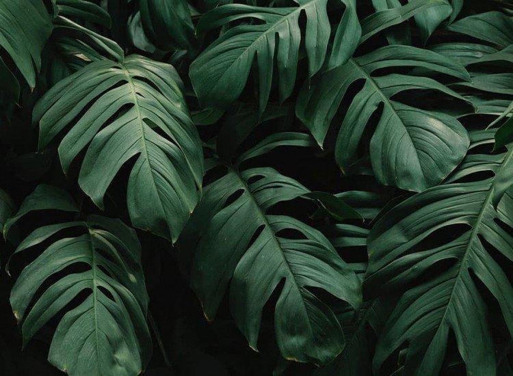 Растения-Фототапет Зелени растения