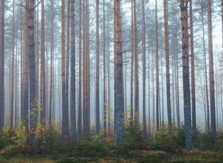 Пейзажи и природа-Фототапет Мъгливата гора