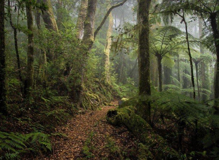 Пейзажи и природа-Фототапет Смърчова гора