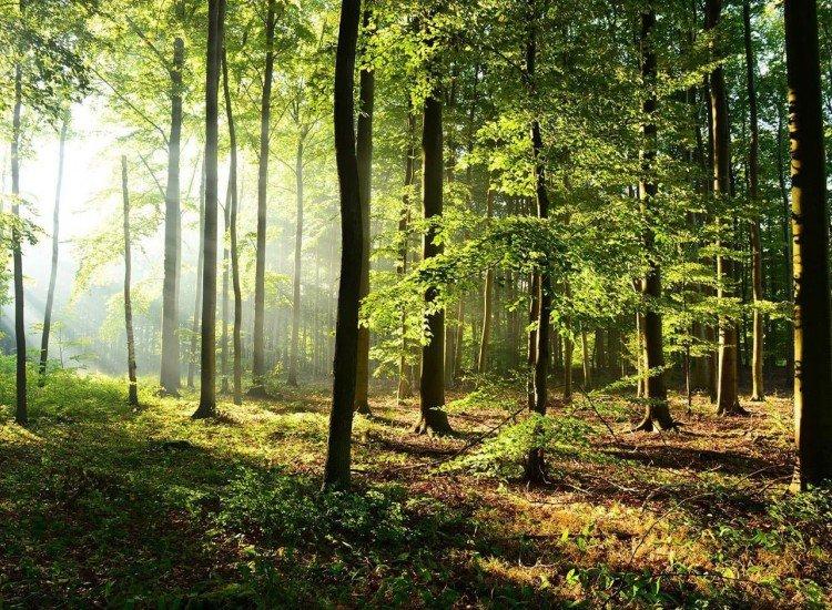 Пейзажи и природа-Фототапет Горски пейзаж