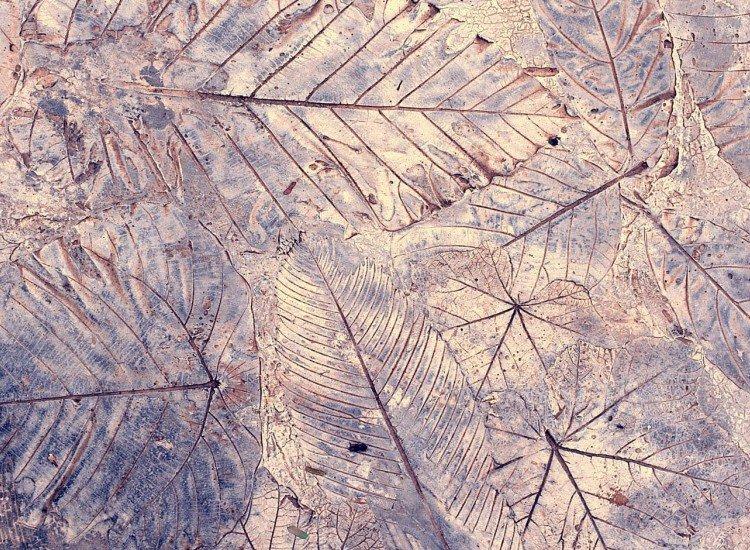 Фототапет Листа върху цимент - Фототапети БГ
