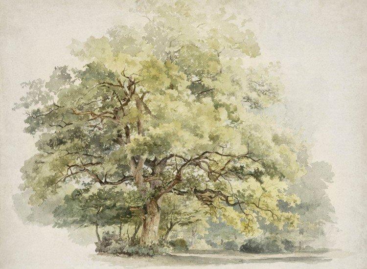 Детски фототапети-Фототапет Дървото
