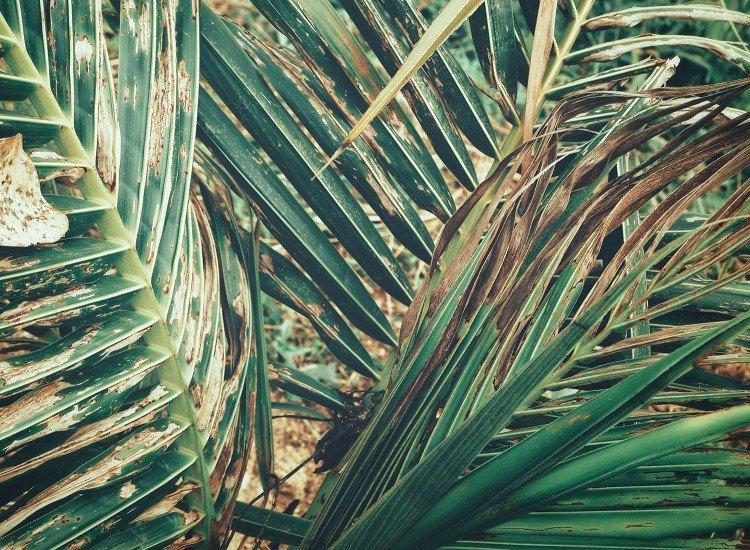 Растения-Фототапет Saw Palmetto