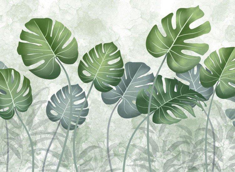 Растения-Фототапет Folhas