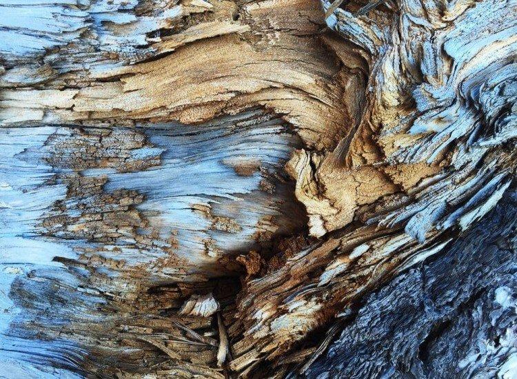 Текстури-Фототапет Дървесна кора