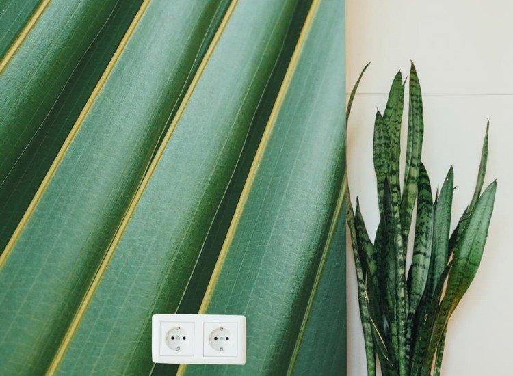 Растения-Фототапет Листо