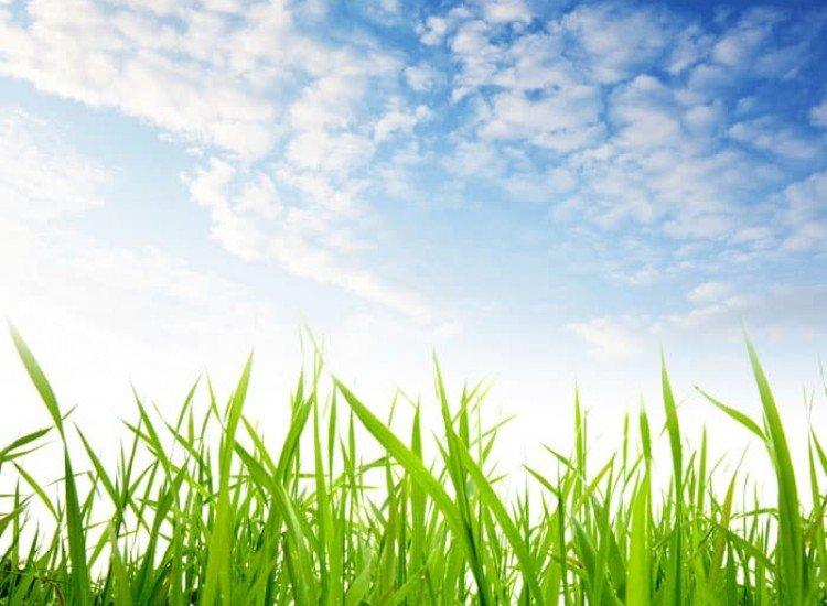 Растения-Фототапет Между тревата