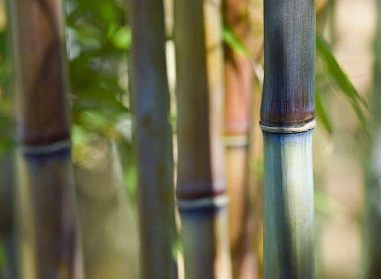 Растения-Фототапет Бамбуци