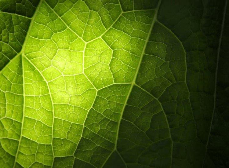 Растения-Фототапет Живот в листото