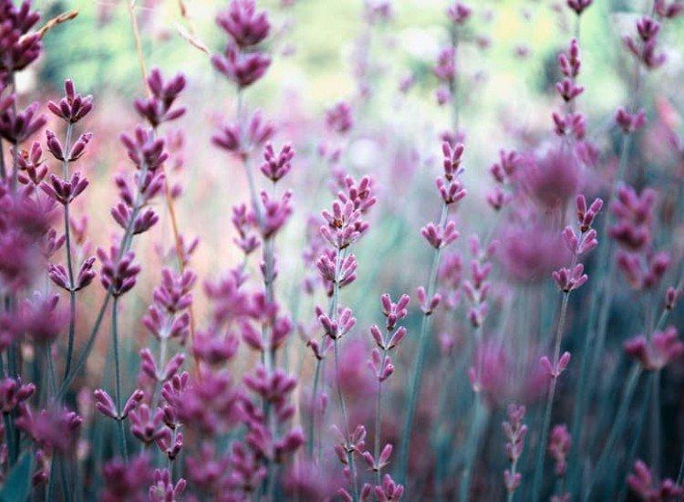 Цветя-Фототапет Между цветята
