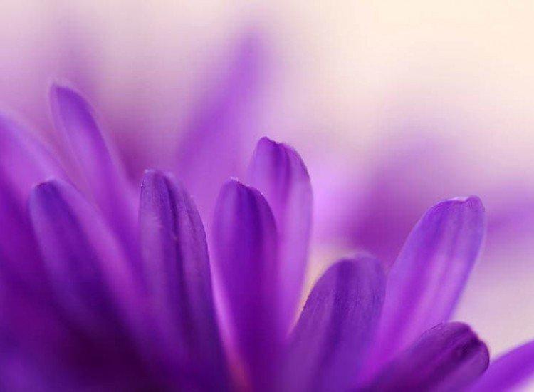 Цветя-Фототапет Лилаво