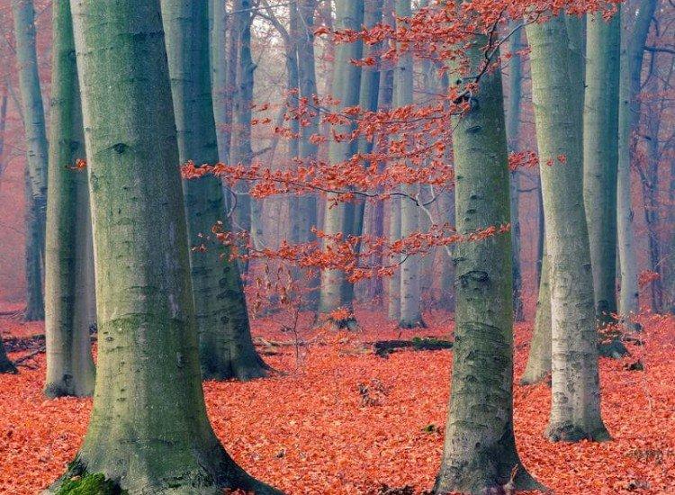 Пейзажи и природа-Фототапет Есенна гора