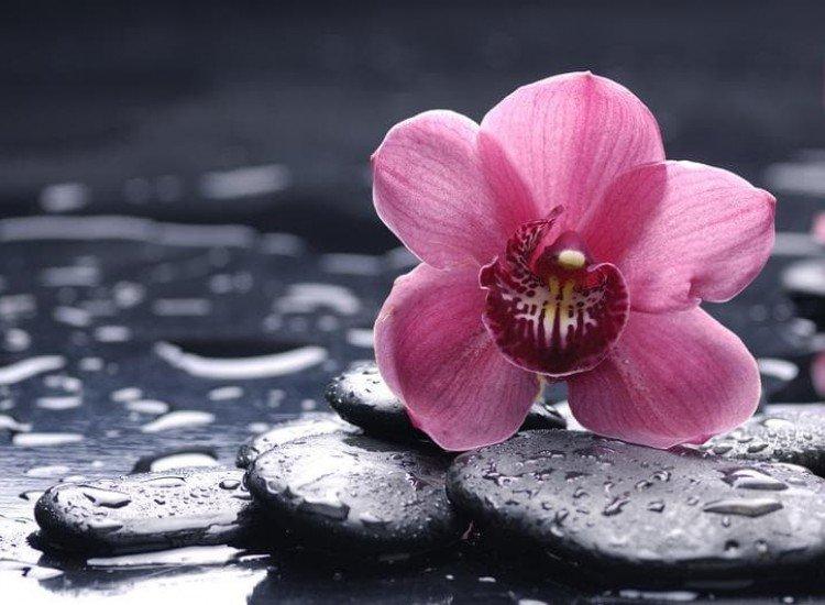 Цветя-Фототапет Розова орхидея
