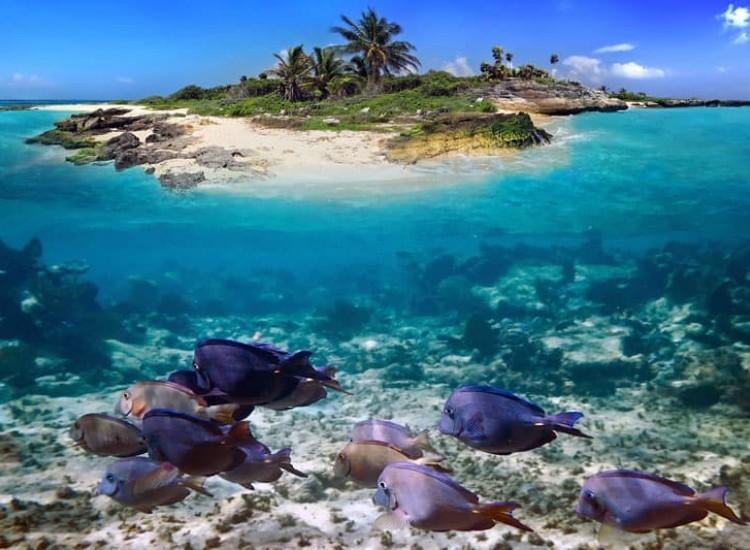Морски и тропически-Фототапет Остров и риби