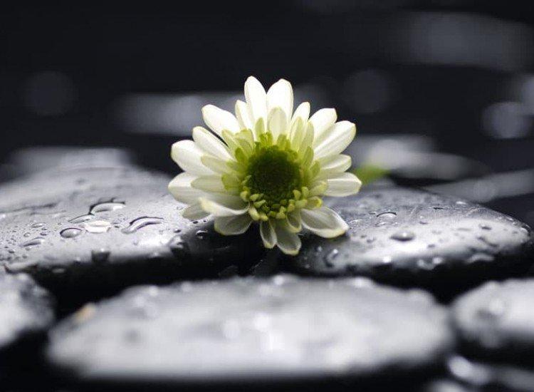 Цветя-Фототапет Чистота