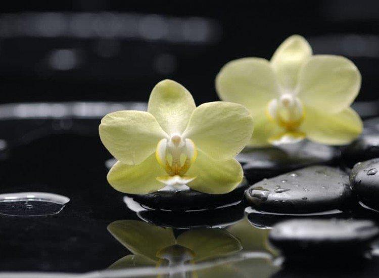 Цветя-Фототапет Орхидеи върху камъни