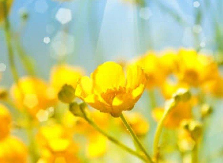 Цветя-Фототапет Топлина