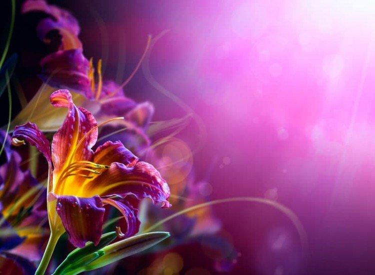 Цветя-Фототапет Лилиум