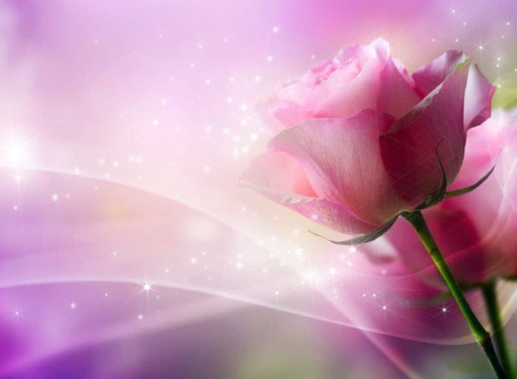 Цветя-Фототапет Нежна роза