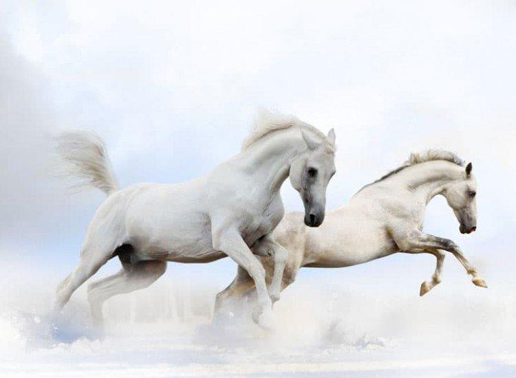 Животни и дива природа-Фототапет Коне в галоп