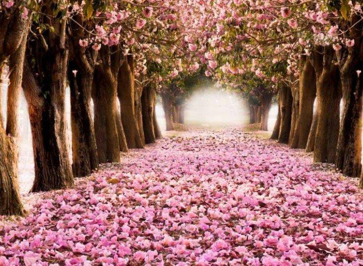Пейзажи и природа-Фототапет Цветна пътека