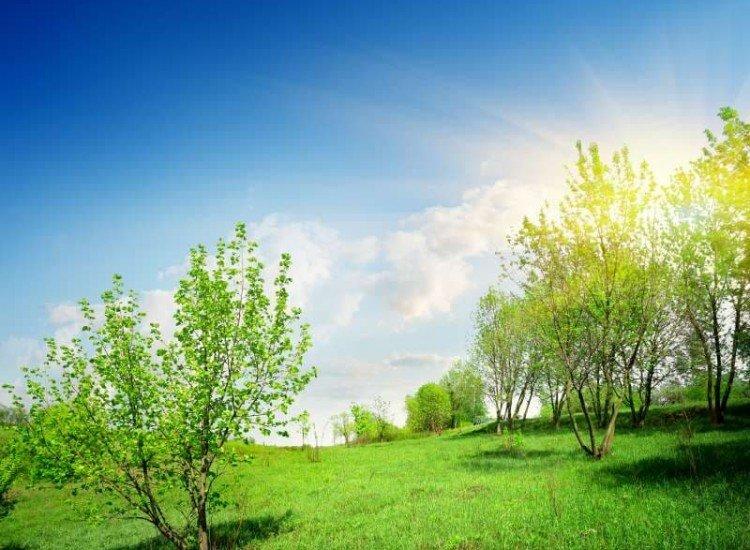 Пейзажи и природа-Фототапет Зелена поляна