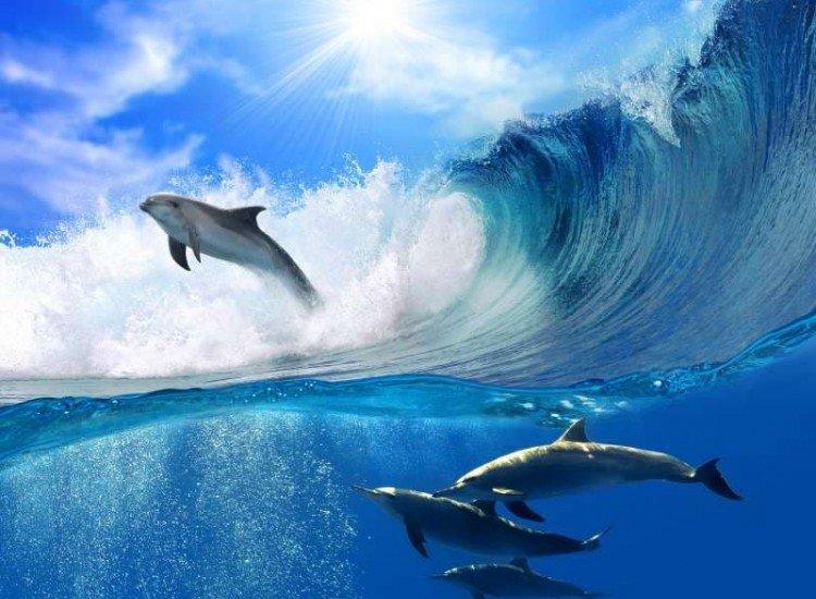 Животни и дива природа-Фототапет Делфини