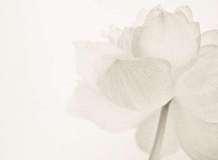 Цветя-Фототапет Мек флорален цвят