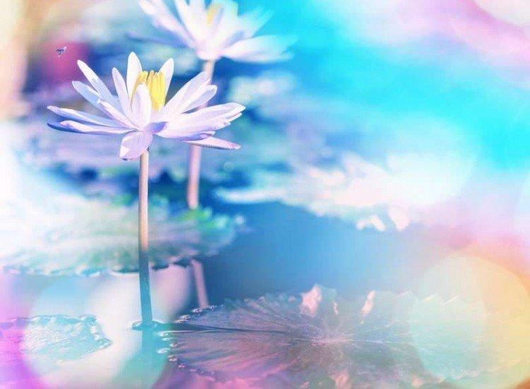 Цветя-Фототапет Лотос на цветен фон