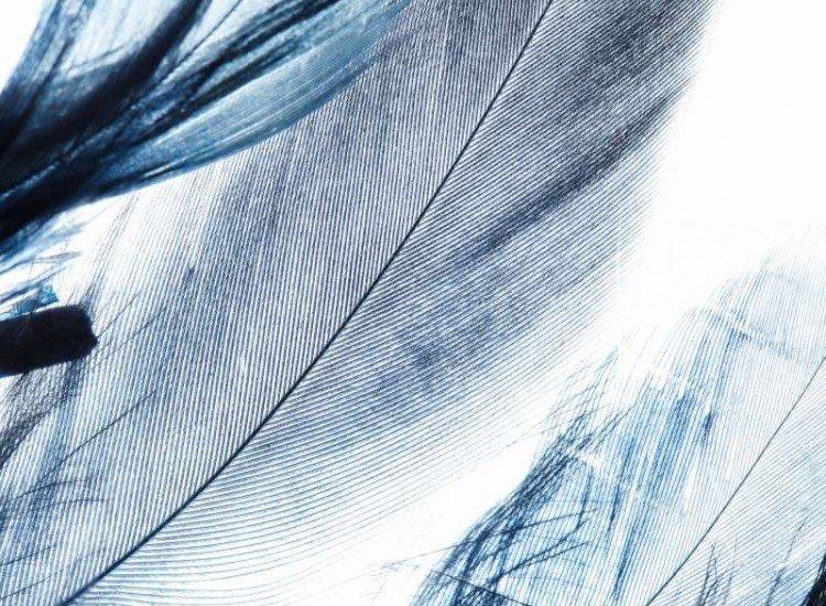 Текстури-Фототапет Цветни пера