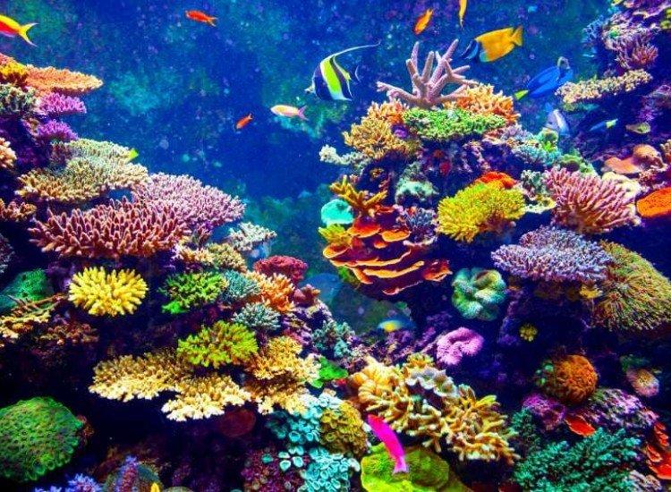 Животни и дива природа-Фототапет Тропически риби