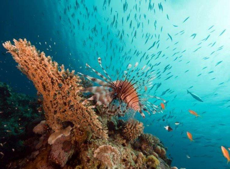 Морски и тропически-Фототапет Корали в Червено Море