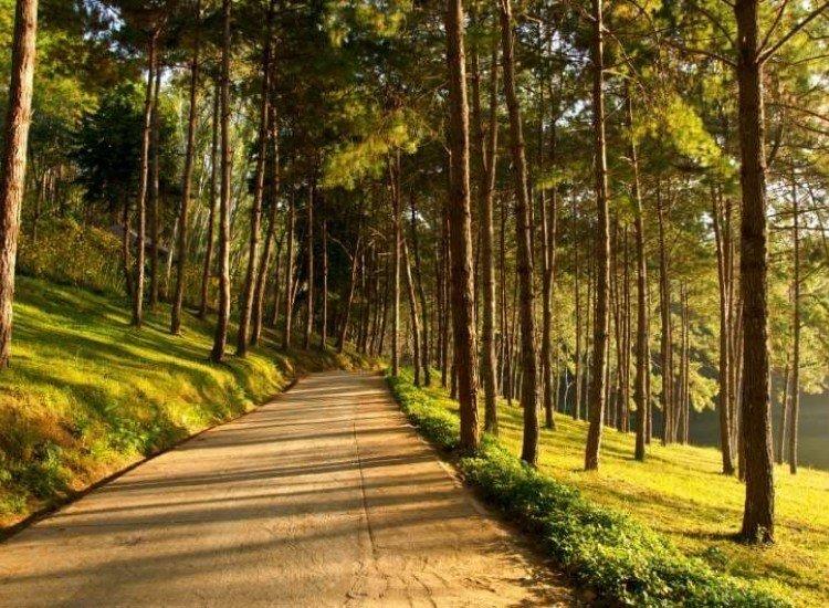 Пейзажи и природа-Фототапет Изгрев в борова гора