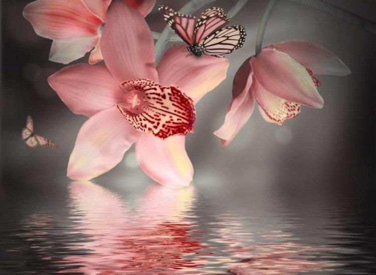 Цветя-Фототапет Орхидеи с пеперуди
