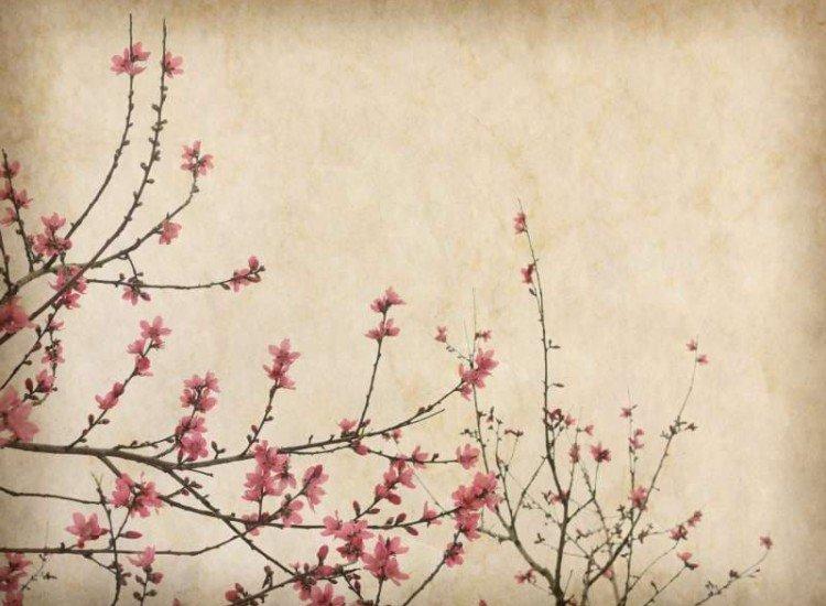 Растения-Фототапет Цветове върху винтидж хартия