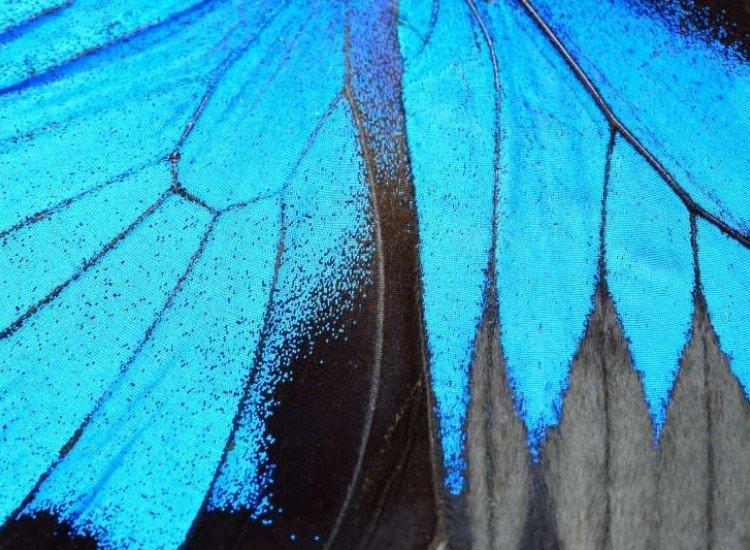Текстури-Фототапет Синьо пеперудено крило