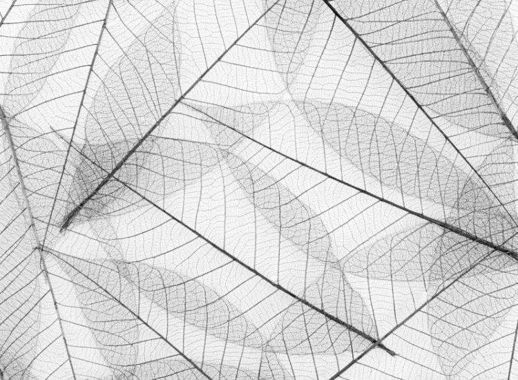 Текстури-Фототапет Бели листа