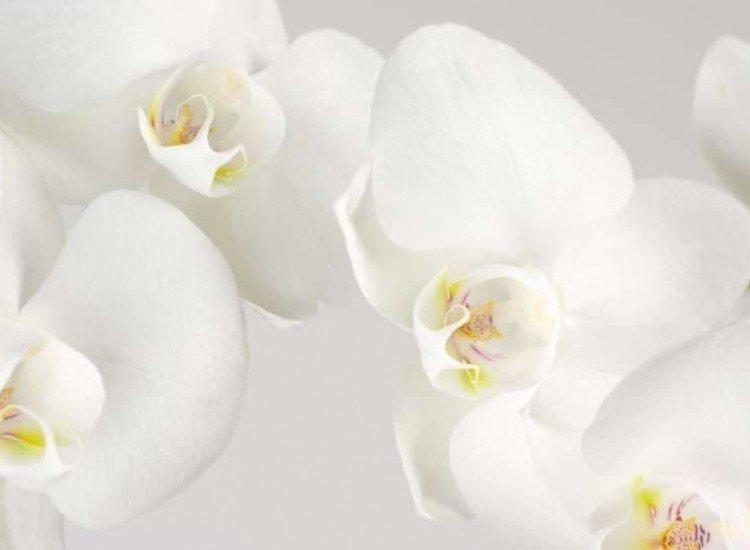 Цветя-Фототапет Бели орхидеи на светъл фон