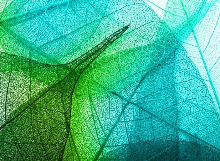 Растения-Фототапет Фон от цветни листа